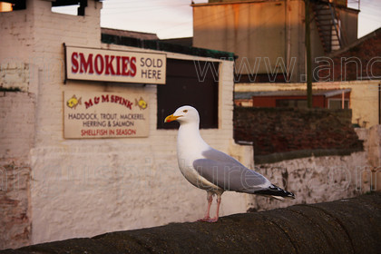 20100501Arbroath4PR 