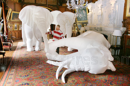 20080306Elephant1 PR 