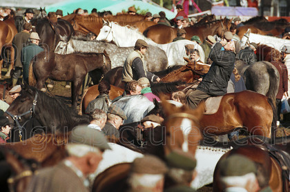 7245684 