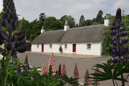 IMG 3334PR copy 