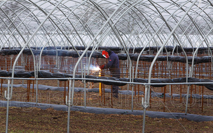 20100208Fruit 2PR 
